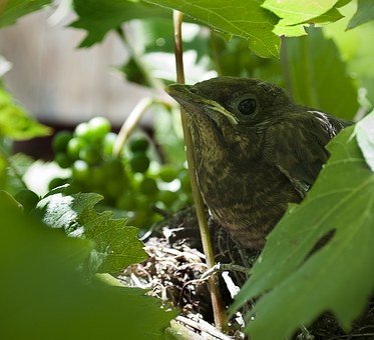 Bird, Cub, Animal, View, Leaves, Bush, Wildlife, Nest