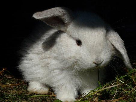 Rabbit, Bunny, Ušáček, White, Ear, Handle, Hairy, Cute