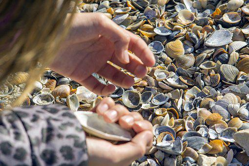 Clams, Search, Great, Hand, Many, Snails, Sand
