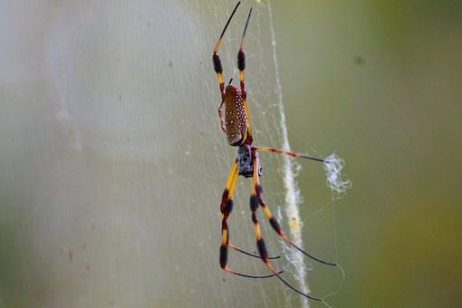 Spider, Web, Florida, Nature, Spider Web, Insect