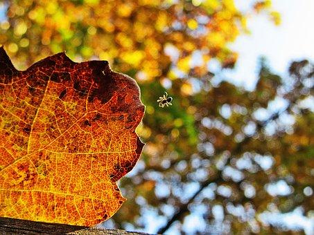 Autumn Leaf, Macro, Spin, Veins, Autumn, Forest, Season