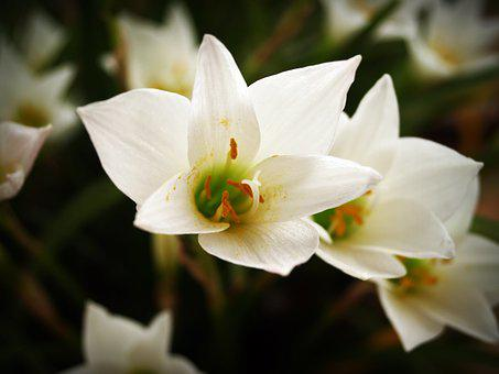 Flower, Spring, White, Summer, Daisy, Chrysanthemum