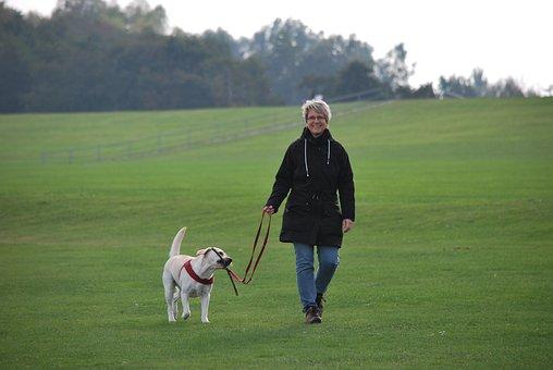 Animal, Dog, Labrador, White, Walk, Dog Keeper
