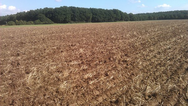 Ploughed, Arable, Harvest, Agriculture, Wheat Field