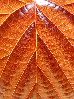 Leaf, Common Hazel, Hazel, Birch Greenhouse, Bush, Tree