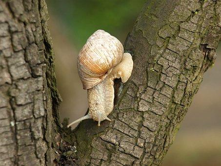 Snail, Tree, Nature, Winniczek, Crawl, Seashell