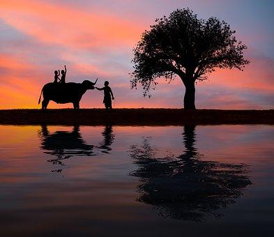 Silhouette, Elephant, Kids, Family, Tree, Seat, Sunset
