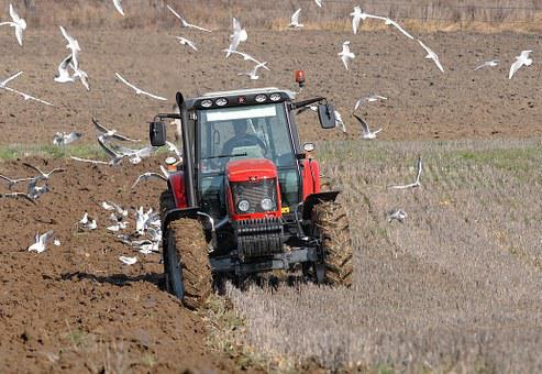 Tractor, Agriculture, Labour, Field, Work In The Fields