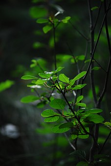 Plants, Green, Leafs, Growth, Nature, Earth, Garden