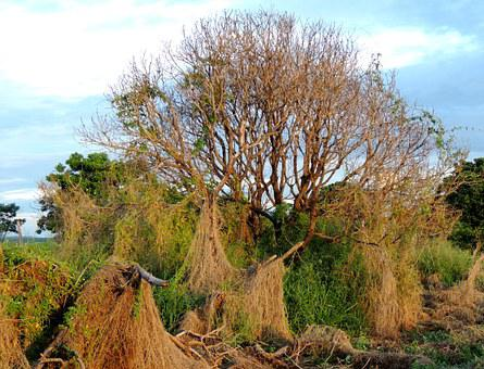 Magic, Tree, Dry, Twigs, Dry Tree, Old Tree, Autumn