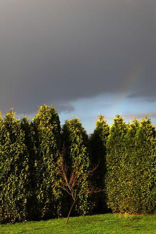 Garden, Tree, Dark, Clouds, Landscape, Nature, Sky