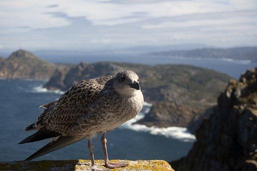 Seagull, Sea, Ave, Bird, Beach, Nature, Sky, Spain