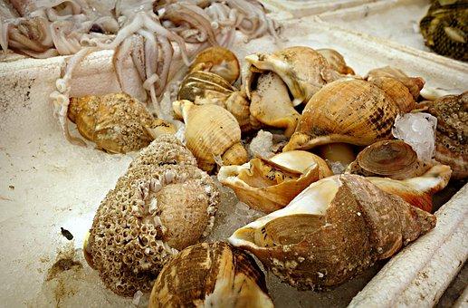 Seashell, Whelk, Sea Snail, Animal, Seafood, Conch