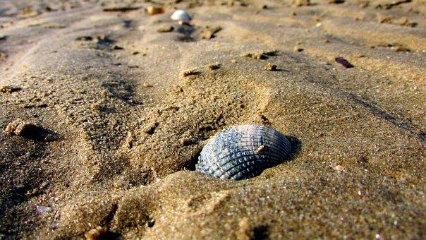 Seashell On The Beach, Sand, Beach, Sea, Summer
