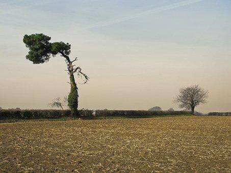 Tree, Pine, Solitaire, Survivor, Duo, France, Bay