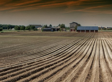 Oftersheim, Germany, Tobacco Farm, Field, Drying Shed