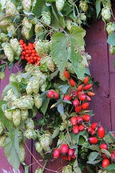 Autumn, October, Hops, Rose Hip, Red, Purple, Leaves