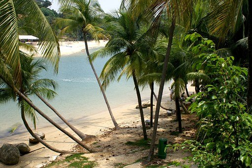 Tropical, Beach, Bay, Secluded, Water, Palm Trees