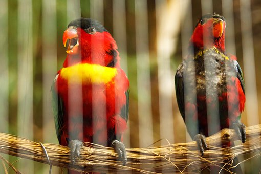 Animal, Beak, Behind, Bars, Bird, Cage, Caged
