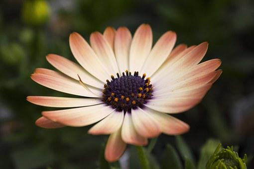Daisy, Flower, Beautiful, Perfect, Colors, White