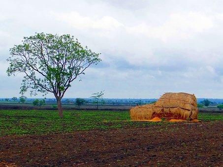 Black, Cotton, Soil, Landscape, Hay Stack, Harvest