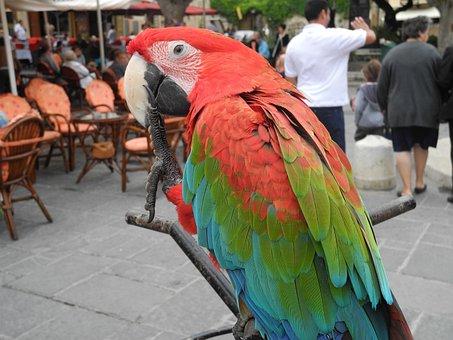 Parrot, Bird, Animal, Colorful, Plumage, Ara, Parrots