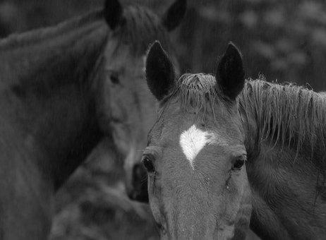 Horses, Animals, Farm, Countryside, Horseback Riding