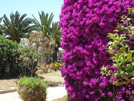 Mediterranean, Garden, Summer, Flora, Plant, Flower