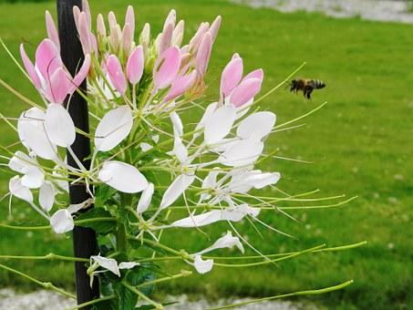 Flower, Flowers, Insect, Insects, Mucha, Bee, Osa, Park
