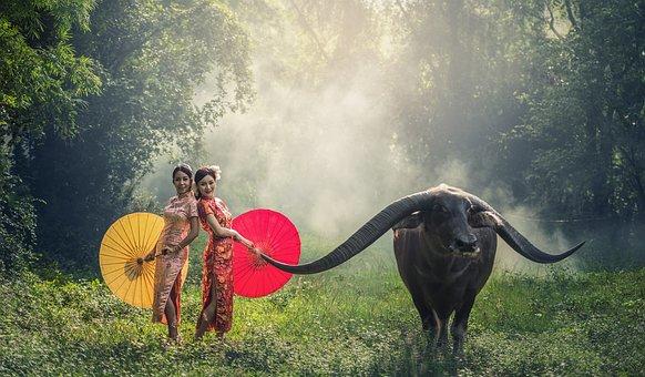 Lady, Buffalo, Asia, Cambodia, Woman, Girl, Indonesia