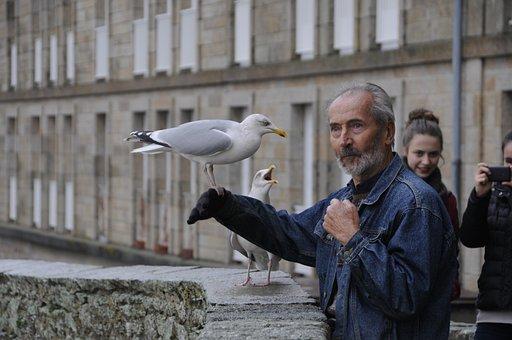 Gull, Bird, Eat, Seed, Sea bird, Old Man