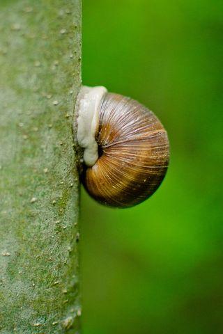 Shell, House Snail, Log, Snail, Tree, Green, Nature