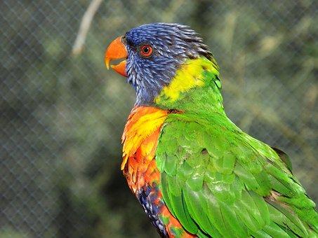Birds, Feathers, Color, Lori, Park