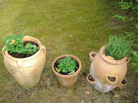 Herbs, Healthy, Pots, Mediterranean, Rosemary