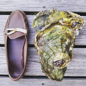 Oyster, Shoe, Shell, Seafood, Monster, Norway