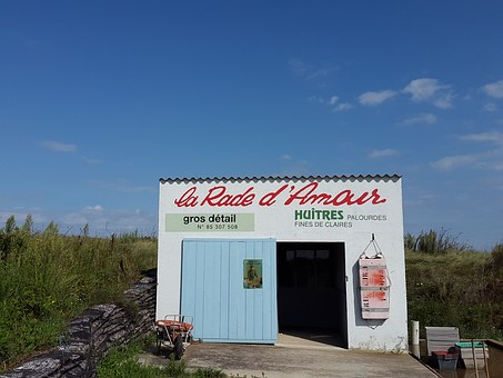 Oyster Farm, Oysters, France, Mussels, Fish