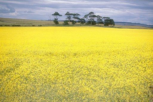 Yellow, Field, Flowers, Nature, Spring, Sky, Prato