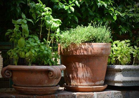 Basil, Thyme, Terracotta, Pot, Herbs, Wild Herbs, Spice