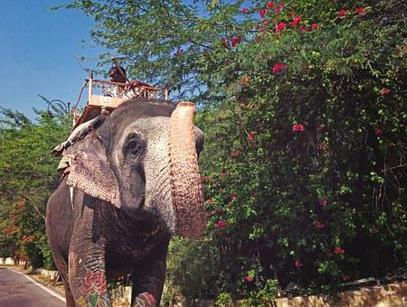 Animal, Elephant, Nature, Traditional, Culture, India