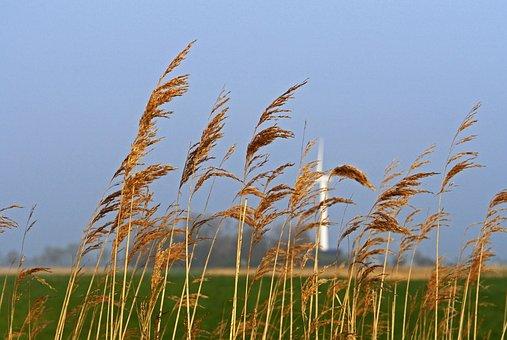 East Frisia, Flat Land, Wedel, Wind Power, Reed