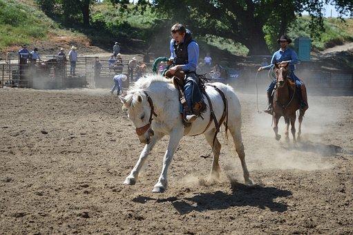 Talahi, White, Horse, Equine, Animal, Nature