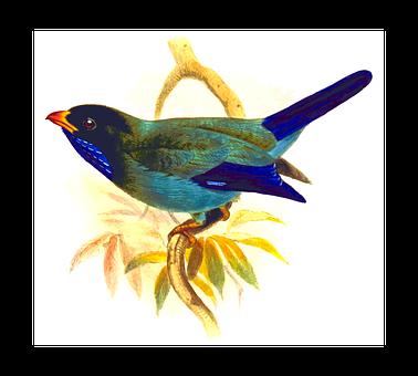 Animal, Bird, Roller