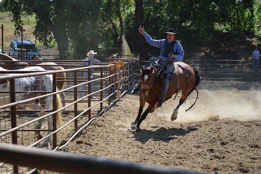 Talahi, Good Ride, Horse, Equine, Animal, Nature