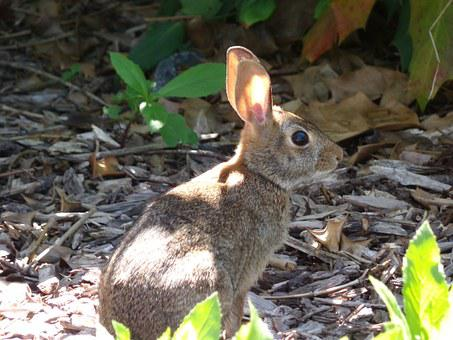 Mammal, Rabbit, Animal, Bunny, Cute, Nature, Small