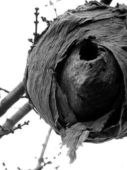 Hornet, Nest, Hornet's Nest, Insect, Bug, Nature, Fly