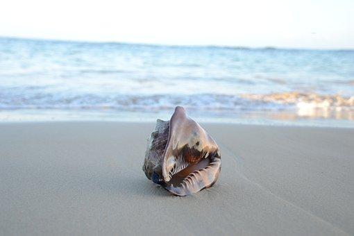 Seashell On Beach, Sand, Beach, Shell, Summer, Sea
