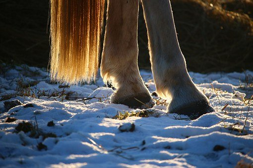 Horse, Snow, Hoof, Tail, Winter, Mold, Frost