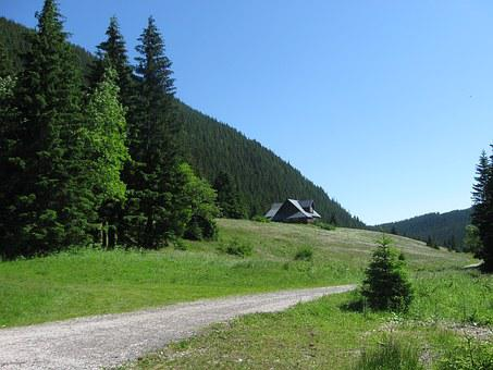 The Giant Mountains, Giant Mine, Path, Solitude, Trees