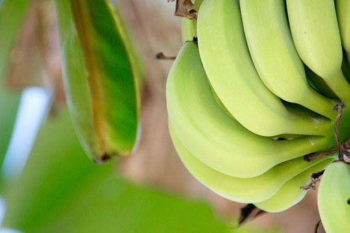 Shrub, Banana, Banana Plant, Fruit, Stalk, Banana Tree