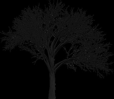 Tree, Branch, Empty, Isolated, Black, Spooky, Halloween